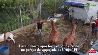 Cavalo leva choque elétrico e morre no Parque de Vaquejada de Uruçuí