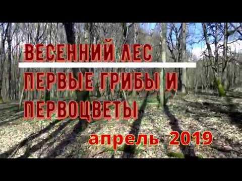 Весенний лес на Кубани. Первые грибы и первоцветы. Лягушачье озеро. Апрель 2019 год.
