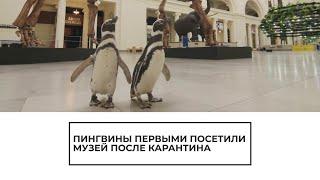 Пингвины первыми посетили музей после карантина