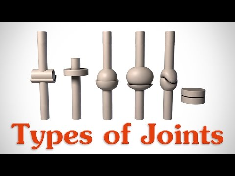 The 6 Types of Joints - Human Anatomy for Artists