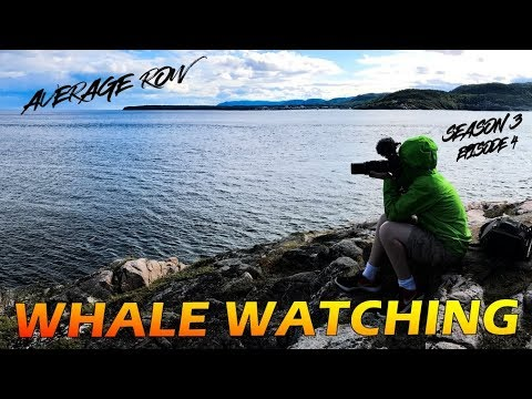 Tadoussac Quebec Whale Watching