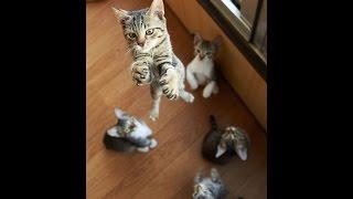 Новая подборка Самых смешных приколов про кошек!Не пропустите!