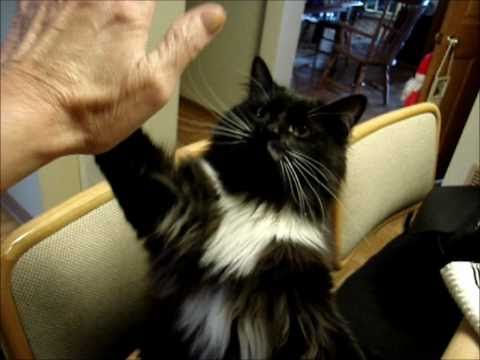 SUPER SMART CAT .. she found me in a SHELTER .. watch KISS at the END!