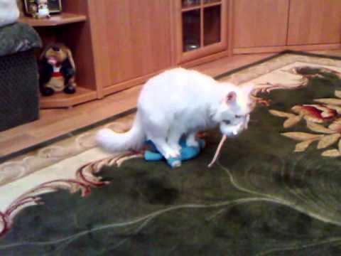 кастрированные коты фото