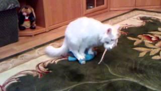 пятилетний кастрированный кот