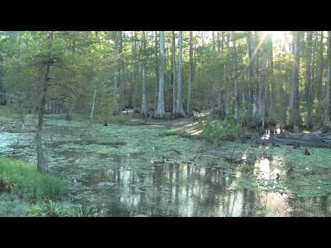 The Untold Story - Disappearing Louisiana Wetlands