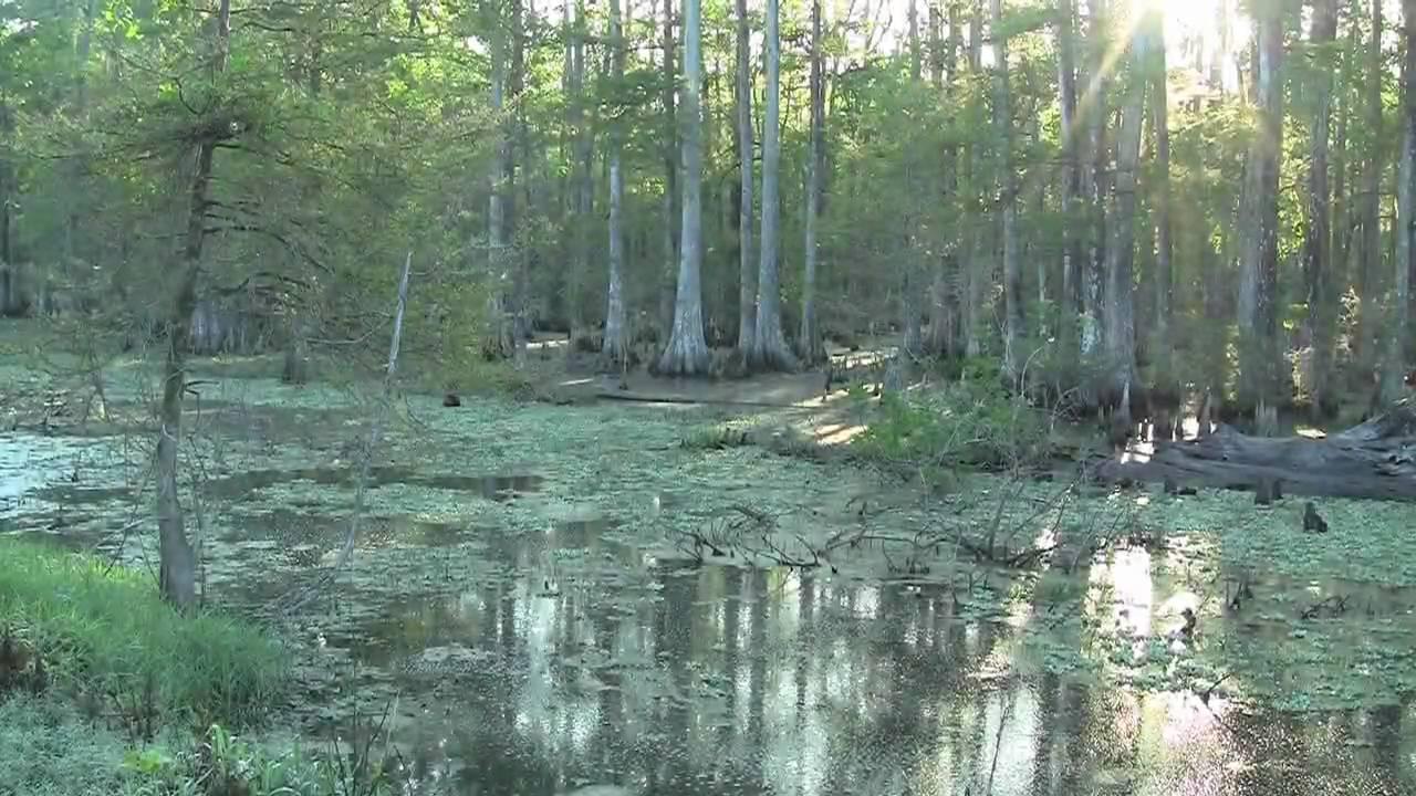 Wetlands 101: Saving Louisiana's refuges | NOLA.com