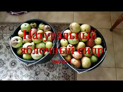 Вопрос: Как приготовить яблочный сидр?