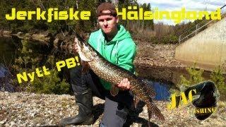 Grymt jerkfiske i Hälsingland + nytt PB!!!