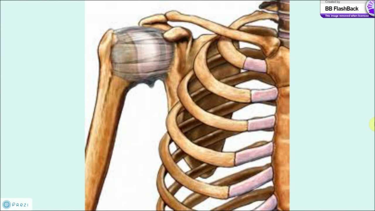 Articulacion del hombro - YouTube