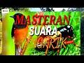 Suara Jangkrik Cocok Buat Masteran Murai Batu Dan Love Bird  Mp3 - Mp4 Download