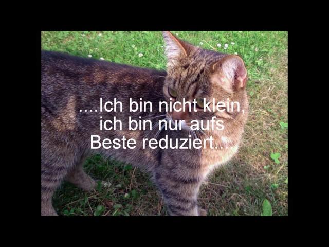 Lustige Whatsapp Status Spruche Spruche Zum Schmunzeln Youtube