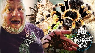 Riesige VOGELSPINNE! (36cm!) | Sind sie wirklich tödlich? | NORBERTS WELT | Zoo Zajac