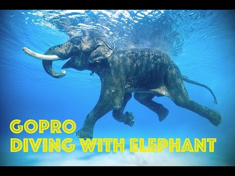 GoPro: Swimming Elephant Underwater HD