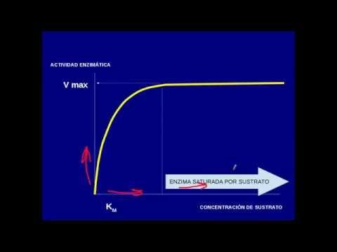 enzimas km velocidad