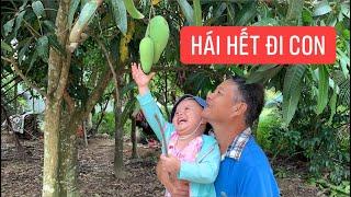Con gái rượu Khương Dừa hái trái cây nhà hàng xóm, cũng may là không bị phát hiện