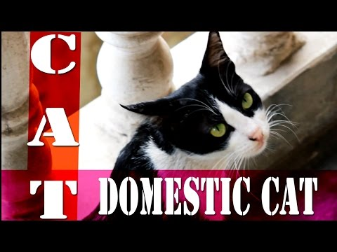 Most Beautiful Cat Breeds | Cutest Pet Cats In The World 2016 | Cat With Beautiful Eyes