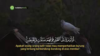 Surah Al- Mulk  (ismail annuri)