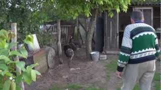 Strusie - Świat Zwierząt Witoldzin 17