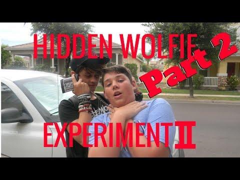 Hidden Wolfie Experiment II (part 2)