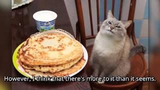 blin cat