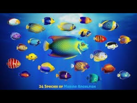 Best Dwarf Angelfish For Saltwater Aquariums