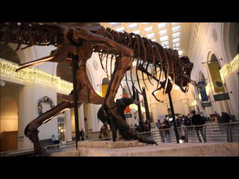 Sue the T-Rex Dinosaur at the Field Museum, Chicago