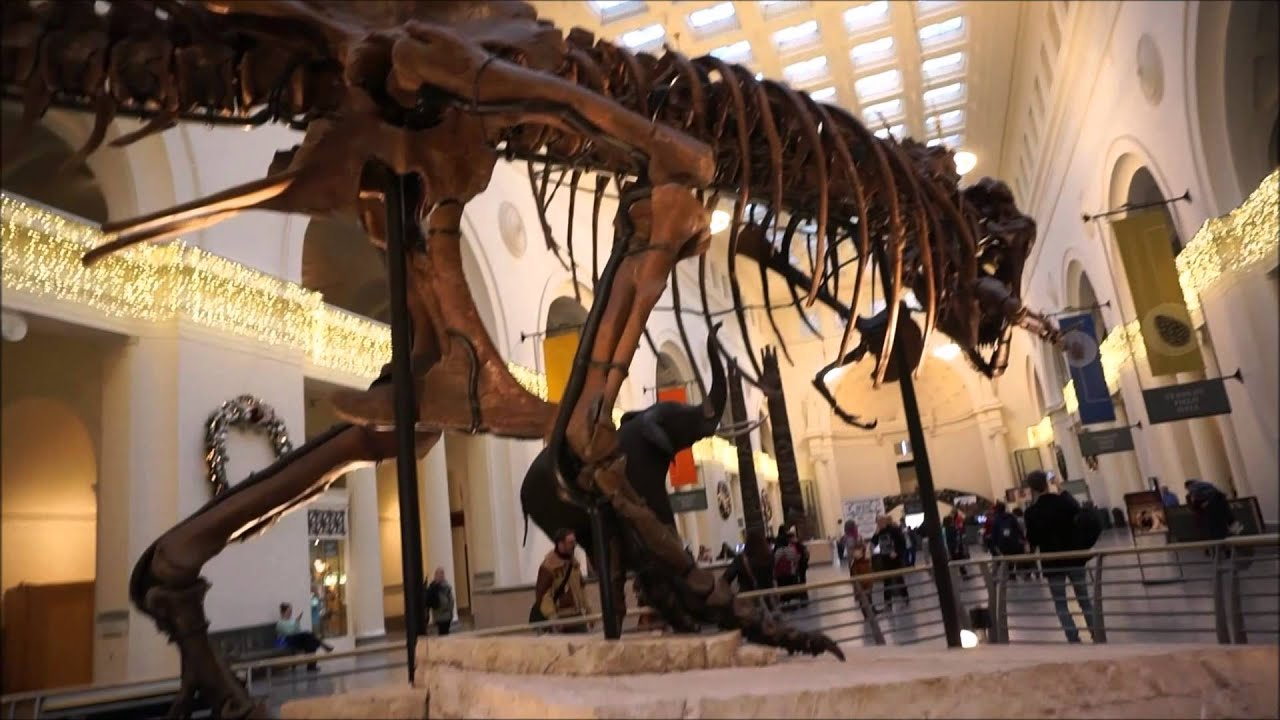 Sue The T Rex Dinosaur At The Field Museum Chicago Youtube