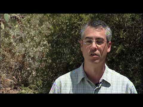 Professor Louis Santiago on Drought and Desert Ecosystems