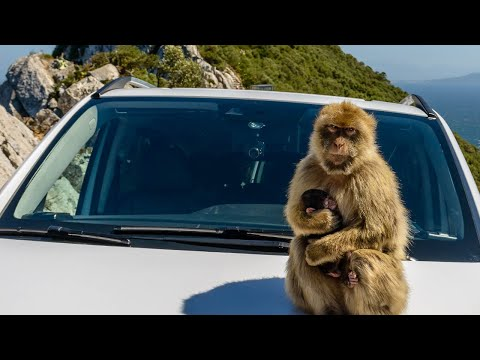 Inside-Out Rock Tours Gibraltar