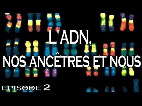 Download 2 - L'ADN, nos ancêtres et nous