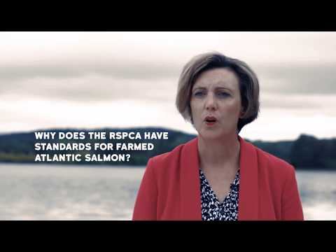 Why does the RSPCA have standards for farmed Atlantic salmon?