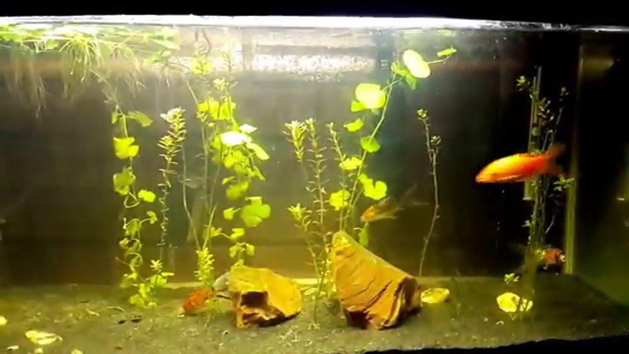 Freshwater aquarium fish ecosystem - Self Sustaining Fish Tank