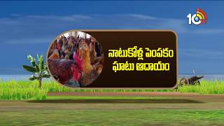 Special Story On Country Chicken Farming   Matti Manishi   10TV News