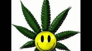 THC  Voio viver in Jamaica