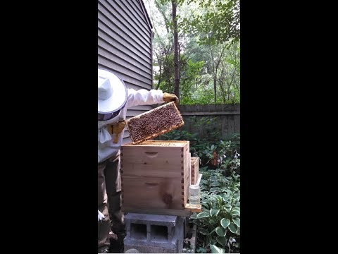 Ohio State's Efforts To Protect Bees