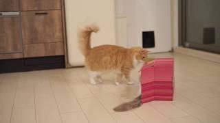 小さめの箱で遊ぶウニッコ thumbnail