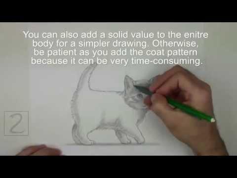 Karakalem Yavru Kedi Çizimi
