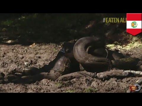 TVで「大蛇アナコンダが人間丸飲み」特番 結末は