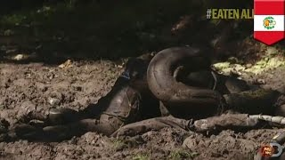TVで「大蛇アナコンダが人間丸飲み」特番 結末は アナコンダ 検索動画 26