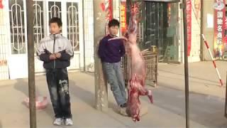 китайцы собакоеды или собачий мех