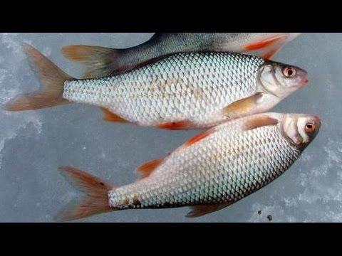 чудо прикормка для рыбы