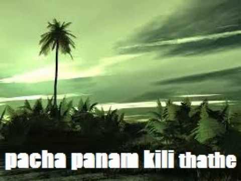 pacha panam kili thathe song