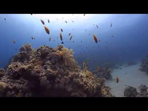 Diving in Sharm-el-Sheikh