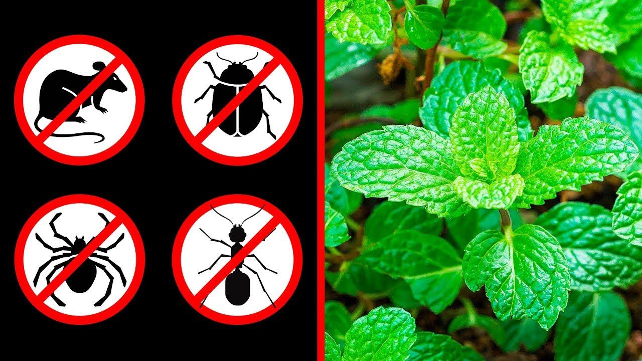 Karınca Neye Gelmez, Nasıl Gider Evdeki Karıncalardan Nasıl Kurtulunur 38