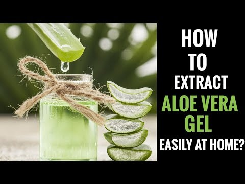 How to extract Aloe Vera Gel easily at home? #NaturalAloeVeraGel #AloeVeraGelForFace