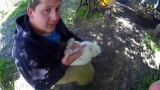 Как лечить кроликов от мокреца.(мокрая мордочка).