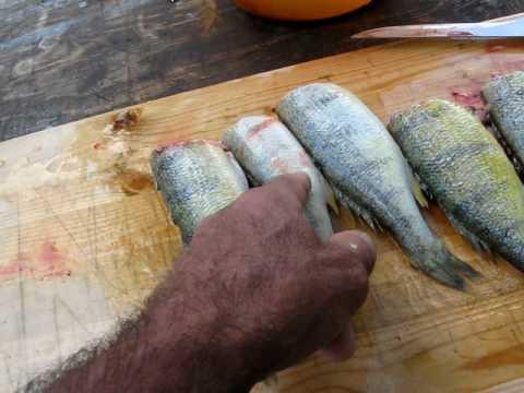 panfish fillet machine