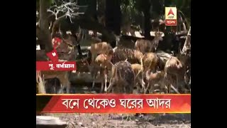 After Alipore Zoo now Burdwan Zoo also started Animal Adoption process, Watch which are th