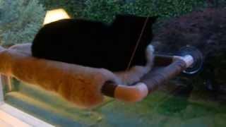 Kitty Cot™ - World's Best Cat Perch™ - Kittycot.com - Cat Perch That Sticks To Windows